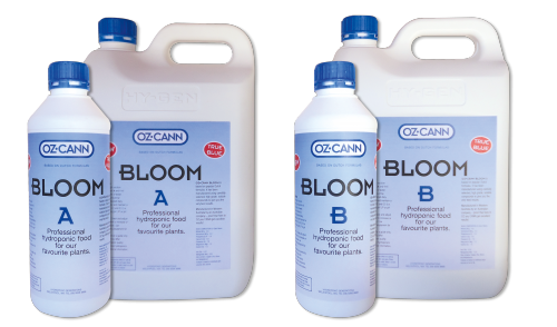 Bloom B product